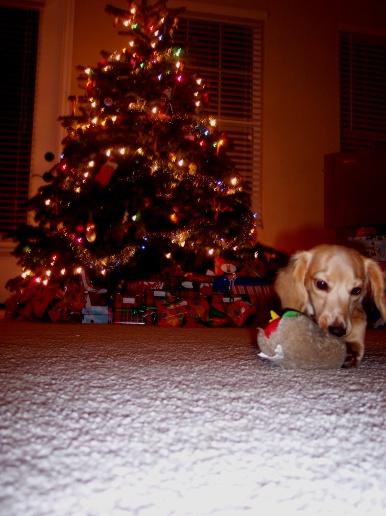 It's a Christmas hotdog!